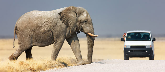The Top 4 Budget Safaris in Namibia